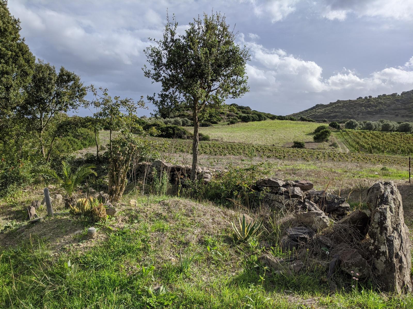 Pedra Niedda Tenute - vignoble en Sardaigne