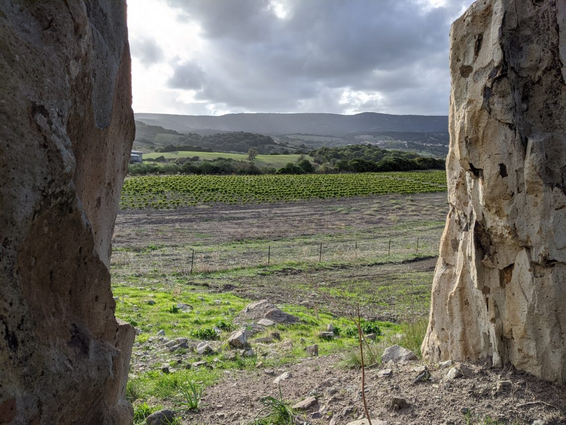 Vignoble Pedra Niedda Tenute