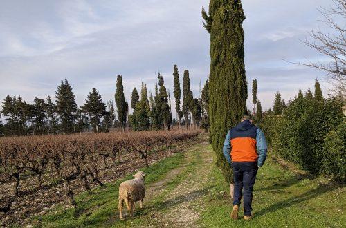 Visite du Domaine Roman - Côtes du Rhône